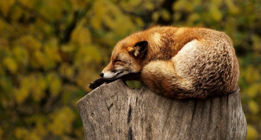 mély alvás, alvás,